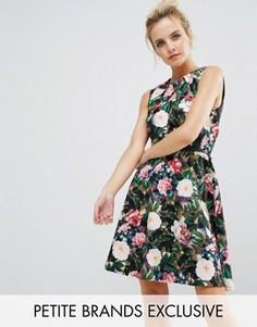 Короткое приталенное платье с цветочным принтом Paper Dolls Petite - Мульти