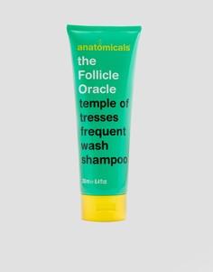 Шампунь Anatomicals The Follicle Oracle - 250 мл - Бесцветный