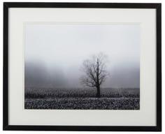 "Постер ""Fog & Tree"""