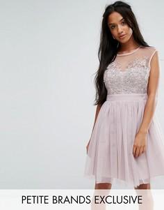 Платье мини для выпускного из тюля с кружевной накладкой Little Mistress Petite - Коричневый