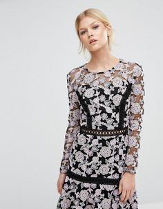 Кружевное приталенное платье True Decadence Petite - Мульти