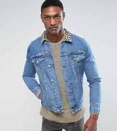 Синяя джинсовая куртка с леопардовым принтом на воротнике и отделкой заклепками ASOS TALL - Черный