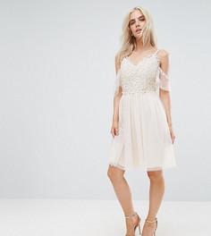 Короткое приталенное платье с открытыми плечами и кружевом Little Mistress Petite - Кремовый