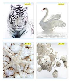 Тетрадь Silwerhof 811500-55 48л. клет. A5 Белая серия 4диз. картон вод.лак скрепка