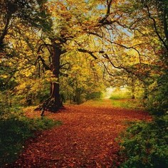 Фотообои Komar Autumn Forest 388 х 270см. (8-068)