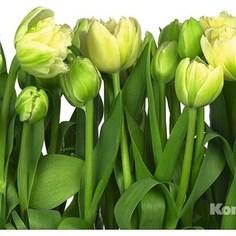 Фотообои Komar Tulips (3,68х2,54 м) (8-900)