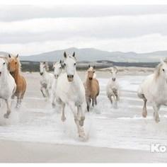 Фотообои Komar White Horses (3,68х2,54 м) (8-986)