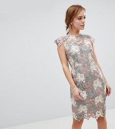 Кружевное платье-футляр Paper Dolls Petite Premium - Мульти