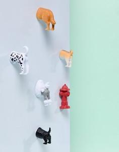 Набор из 6 магнитов с дизайном в виде хвоста собаки Kikkerland - Мульти