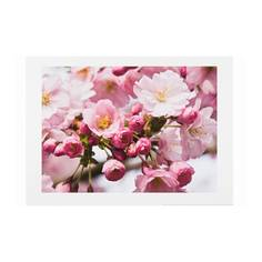 ЭДЕЛВИК Постер, весенний цветок II Ikea