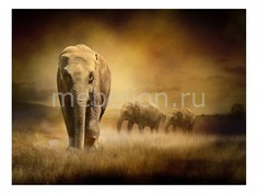 Панно (80х60 см) Слон 114974025 Ekoramka