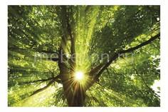 Панно (60х40 см) Дерево и солнце 127280561 Ekoramka