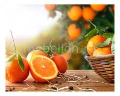 Панно (50х40 см) Апельсины 1744021К5040 Ekoramka