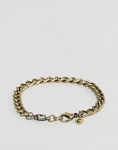 Золотистый браслет-цепочка с черепом Classics 77 - Золотой