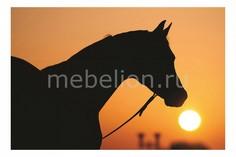 Панно (60х40 см) Лошадь 113282331 Ekoramka