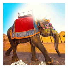 Панно (40х40 см) Слон 1737019К4040 Ekoramka