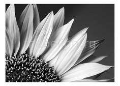 Панно (70х50 см) Цветок 1727013 Ekoramka