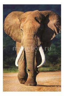 Панно (60х40 см) Слон 118828764 Ekoramka