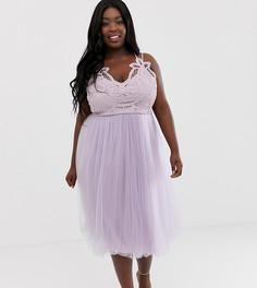 Премиум-платье миди из тюля с кружевным лифом ASOS DESIGN Curve - Мульти