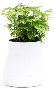 Кашпо Qualy Горшок цветочный Hill Pot, большой, белый