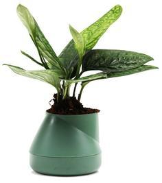 Кашпо Qualy Горшок цветочный Hill Pot, маленький, зеленый