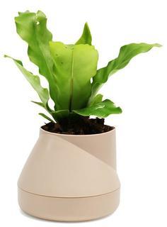 Кашпо Qualy Горшок цветочный Hill Pot, маленький, кремовый