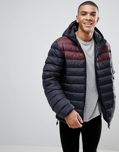 Дутая куртка с капюшоном и контрастной вставкой French Connection - Черный