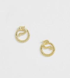Серьги-гвоздики из позолоченного серебра в виде змей Kingsley Ryan - Золотой
