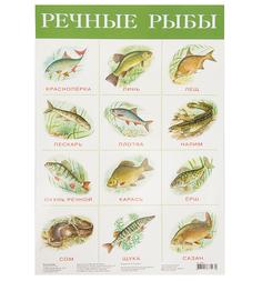 Плакат Дрофа Речные рыбы