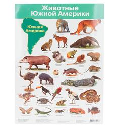 Плакат Дрофа Животные Южной Америки