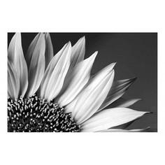 Картина (60х40 см) Цветок подсолнуха HE-101-802 Ekoramka