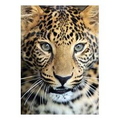 Картина (50х70 см) Леопард SE-102-152 Ekoramka