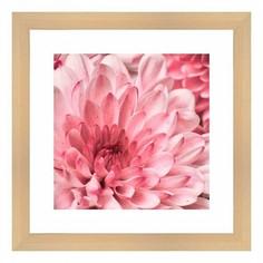 Картина (40х40 см) Розовые цветы BE-103-180 Ekoramka