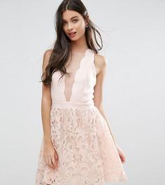 Короткое приталенное платье с ажурной юбкой и фигурным краем Little Mistress Petite-Кремовый