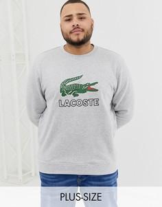 Серый свитшот с круглым вырезом и логотипом Lacoste