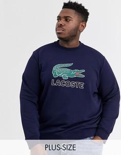 Темно-синий свитшот с круглым вырезом и логотипом Lacoste
