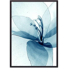 Постер в рамке Дом Корлеоне Прозрачный цветок 30x40 см