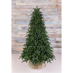 "Ель Triumph Tree ""Нормандия"", пушистая, темно-зеленая"