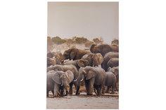 Картина Слоны Hoff