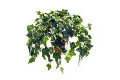Искусственное растение в кашпо Плющ Hoff
