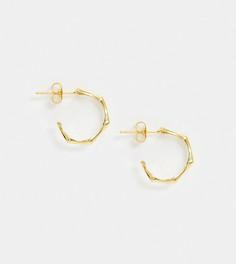 Позолоченные серебряные серьги-кольца в виде бамбука Kingsley Ryan-Золотой