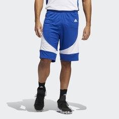 Баскетбольные шорты N3XT L3V3L Prime adidas Performance