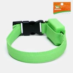 Ошейник светящийся узкий для небольших собак, 26 х 1,5 см, зеленый Пижон
