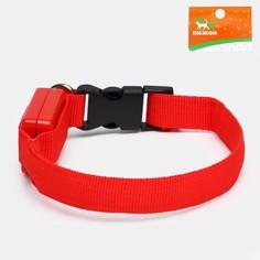Ошейник светящийся узкий для небольших собак, 26 х 1,5 см, красный Пижон