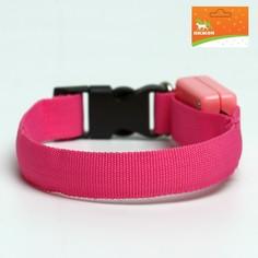 Ошейник светящийся узкий для небольших собак, 26 х 1,5 см, розовый Пижон
