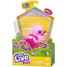 Птичка Little live pets Твити-Тиара Moose