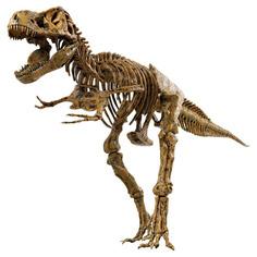 Набор Edu-Toys Скелет динозавра. T-Rex